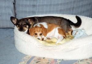 Sweetie & Daisy